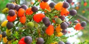 مزارع يعرض شجرة تنتج 40 نوعا من الفاكهة