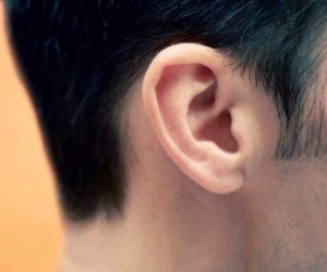 سحر الأذن.. 25 ألف خلية شعيرية تعمل بكامل طاقتها على مدار اليوم