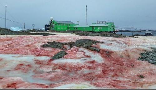 ثلوج بلون الدم تكسو القطب الجنوبي
