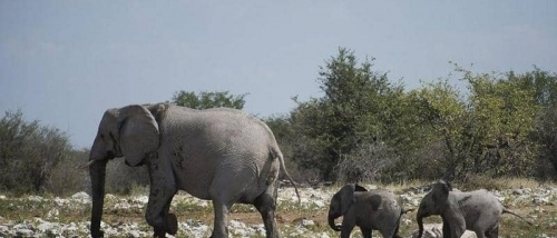 دولة تواجه مشكلتها الأكبر ببيع 1000 حيوان بري