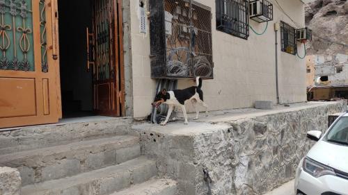 مواطنون: كلاب صيرة يا بن جرادي