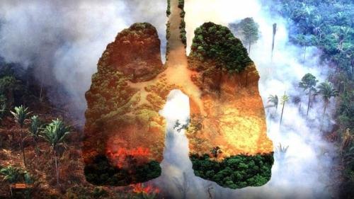 """إنفوغرافيك.. كيف تموت """"رئة الأرض""""؟"""
