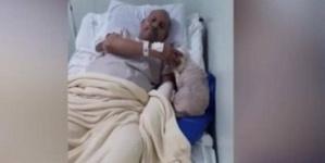 زارت صاحبها المريض في المستشفى.. قصة تلخص وفاء الكلاب