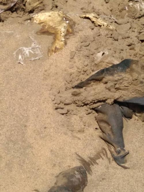 بالصور .. شرطة لحج تعثر على جثة مجهولة الهوية