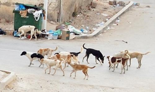 """كلاب مسعورة تفترس """"6"""" أطفال جنوب اليمن"""