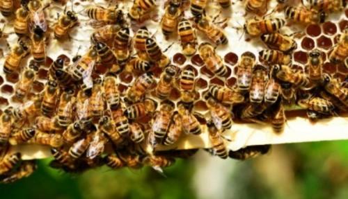 السعودية: لسعات النحل تتسبب في فاجعة كبيرة لهذه العائلة
