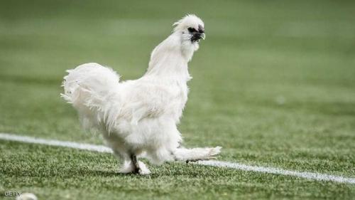 """مقاضاة لاعب كرة قدم.. والسبب """"دجاجة"""""""