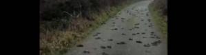 """تحقيق في """"لغز بيئي"""".. مئات الطيور المحلقة سقطت ميتة فجأة"""