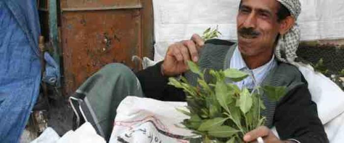 """""""القات"""".. فاكهة الحرب في اليمن"""