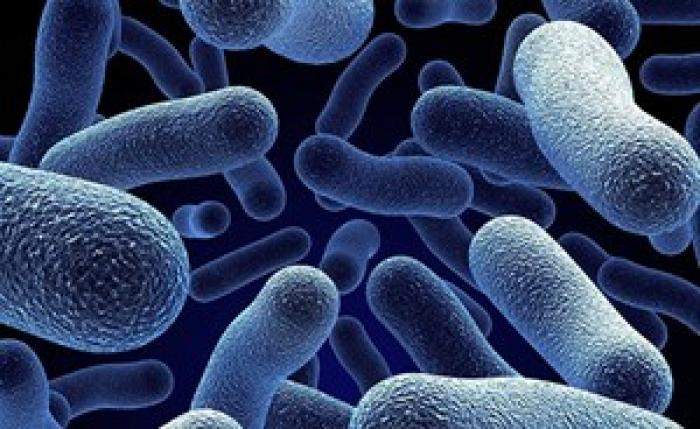 جهاز تكييف السيارة مرتع لآلاف البكتيريا