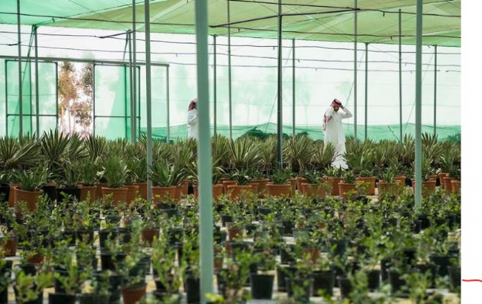 لتلبية احتياجات الاستادات والمناطق المحيطة بالمساحات الخضراء : اللجنة العليا تُدشّن أحد أكبر المشاتل الزراعية في العالم