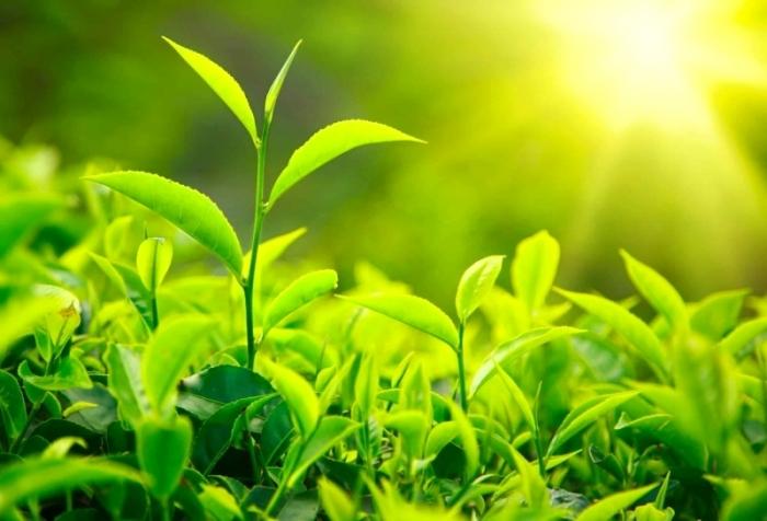 النبات لديه وسائل إدراك شبيهة بحواس الإنسان