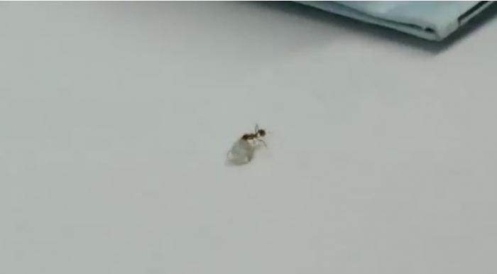 صدق أو لا تصدق .. نملة تحاول سرقة ألماس ( فيديو)