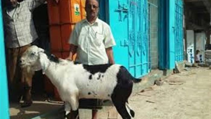 أسعار الأضاحي تصدم المواطنين في أسوق المواشي بالعاصمة المؤقتة عدن